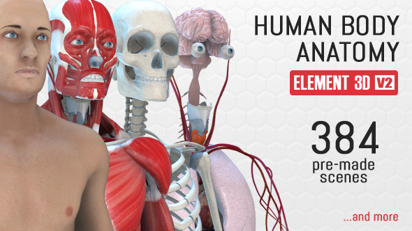 human-body-anatomy-preview